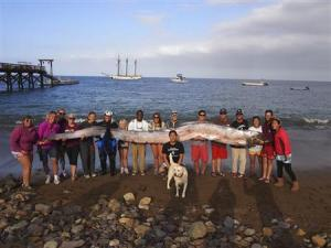The crew of sailing school vessel Tole Mour and Catalina Island Marine Institute instructors hold an 18-foot-long oarfish that was found in the waters of Toyon Bay on Santa Catalina Island