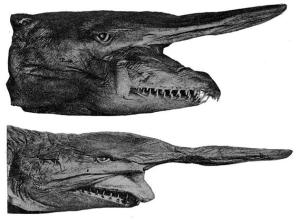 Scariest-Sea-Monsters-Goblin-Shark-631